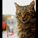 When does come out Kedi movie 2017