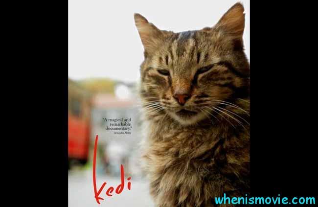 Kedi movie 2017